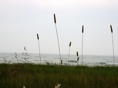 Tall grasses near water's edge